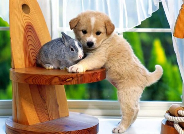 cute baby animal pictures (34)