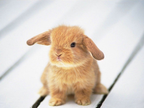 cute baby animal pictures (35)