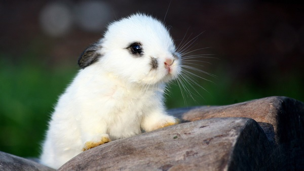 cute baby animal pictures (39)