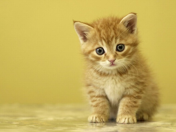 cute baby animal pictures (4)