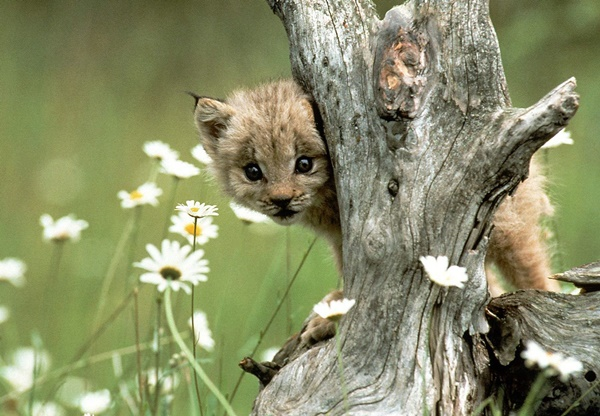 cute baby animal pictures (41)