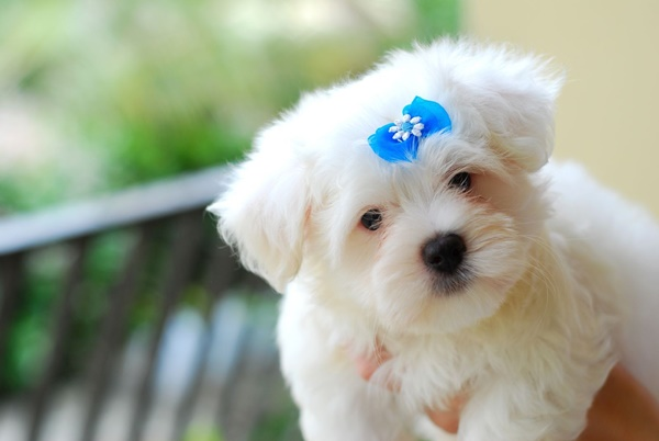 cute baby animal pictures (45)