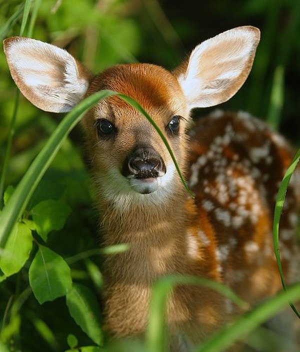 cute baby animal pictures (48)