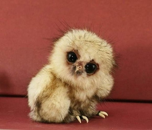 cute baby animal pictures (49)