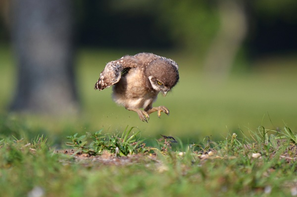 cute baby animal pictures (54)