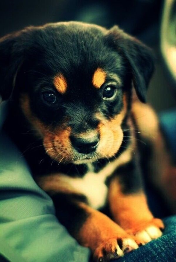 cute baby animal pictures (6)