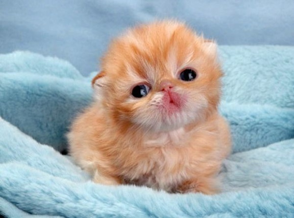 cute baby animal pictures (7)