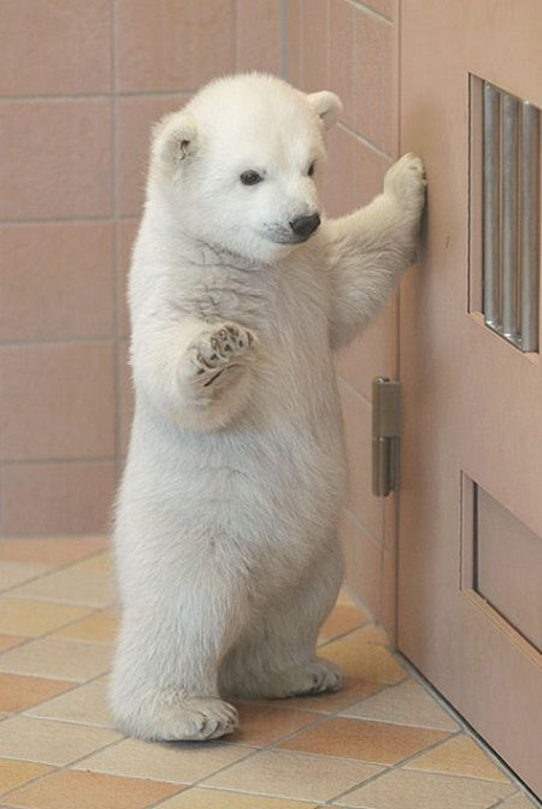 cute baby animal pictures (9)