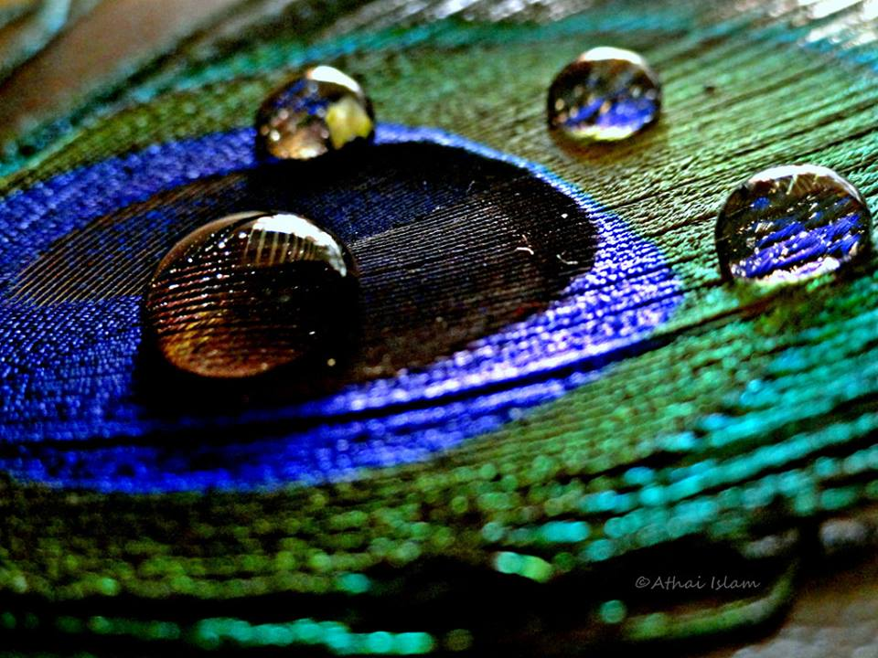 30-stunning-raindrop-peacock-feather-works-16