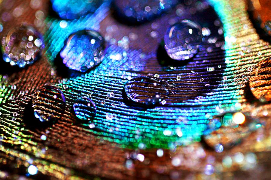 30-stunning-raindrop-peacock-feather-works-5