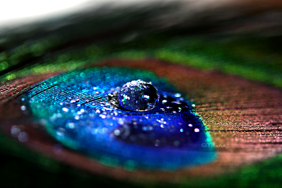 30-stunning-raindrop-peacock-feather-works-6
