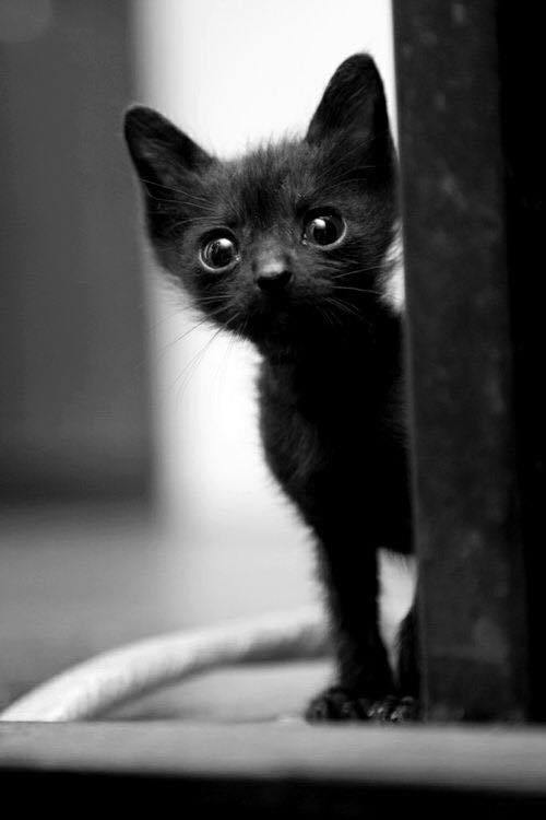 cat-photography-11