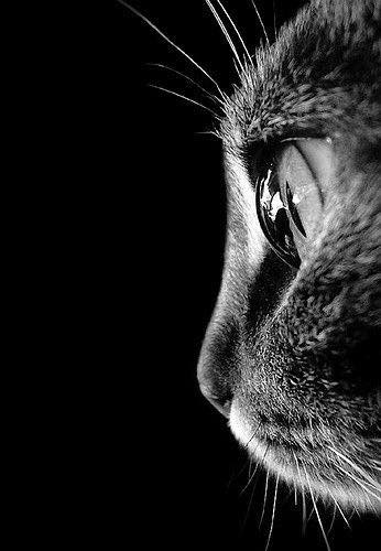 cat-photography-18