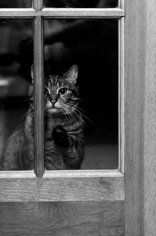 cat-photography-6