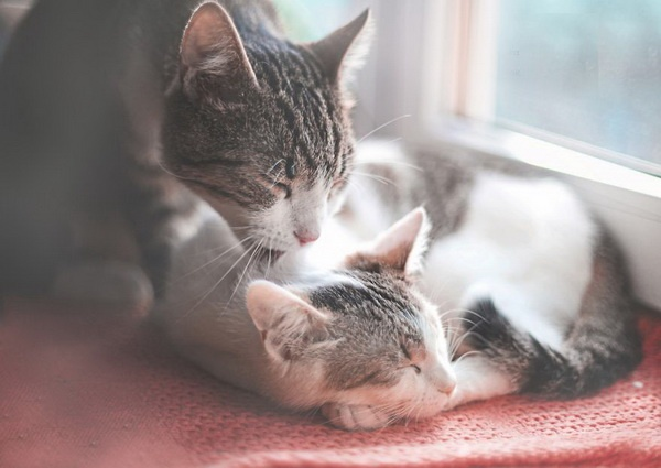 cats lovely moments