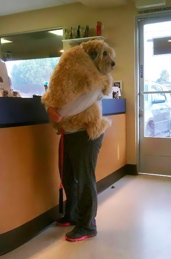 humans best friends hugs
