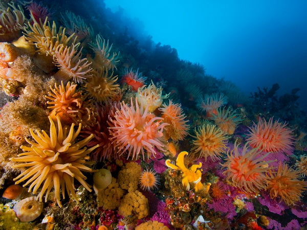 colorful marine life
